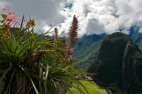 Machu Picchu is a green world