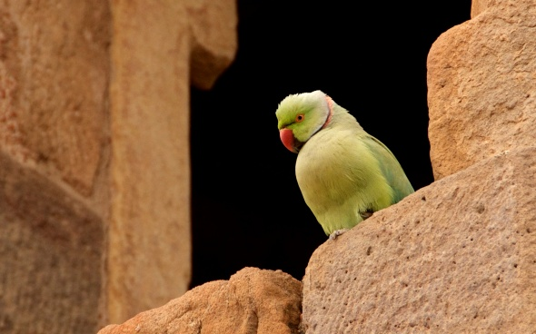Parrot overlooking its roost