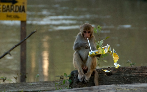 Healthy Monkey Cuisine??