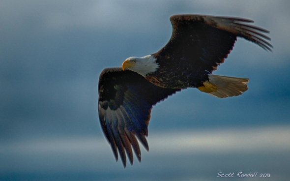 Symbol of our nation - flying high to keep our spirits UP