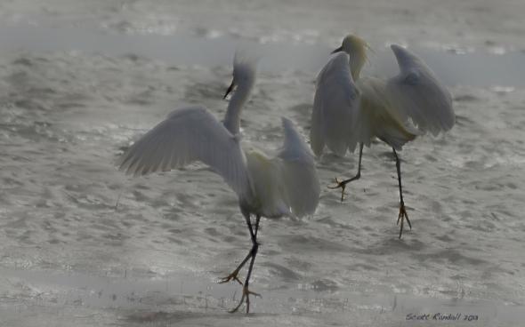 Egret tag??
