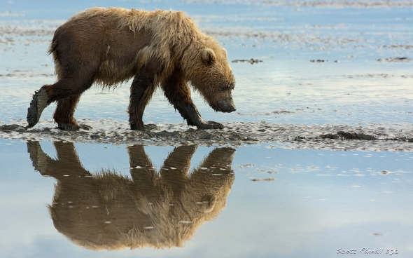 Raggedy Bear Reflection
