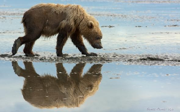 Raggedy Bear Reflection