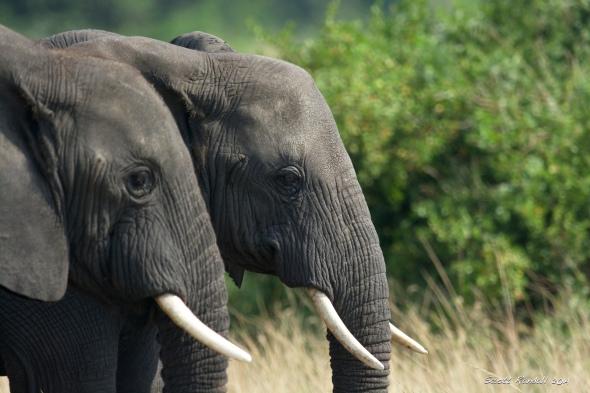 Elephants everywhere we looked
