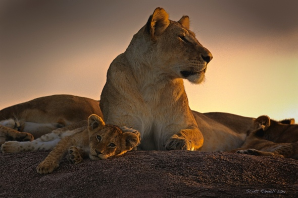 Family Portrait at Sunset