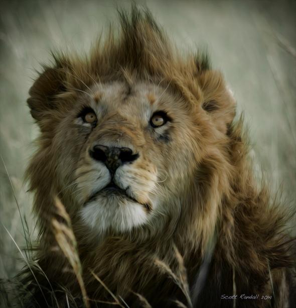 Serengeti Treasure