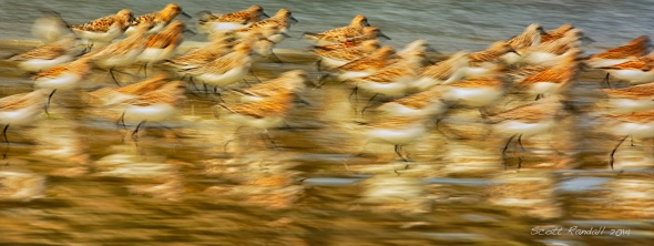 Beach Birds in Motion.....