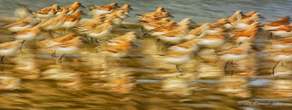 Beach Birds in Motion.....