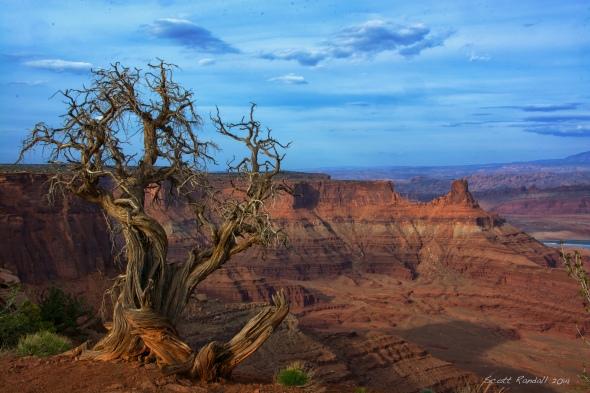 Canyon Scarecrow