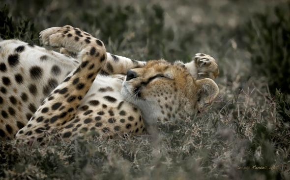 Serengeti Dreaming