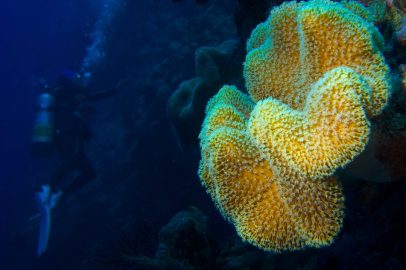"""Colorful soft coral on """"our wall"""""""