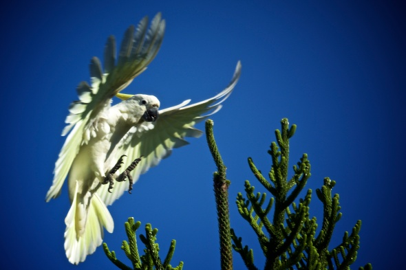 ...a fleeting, flying moment
