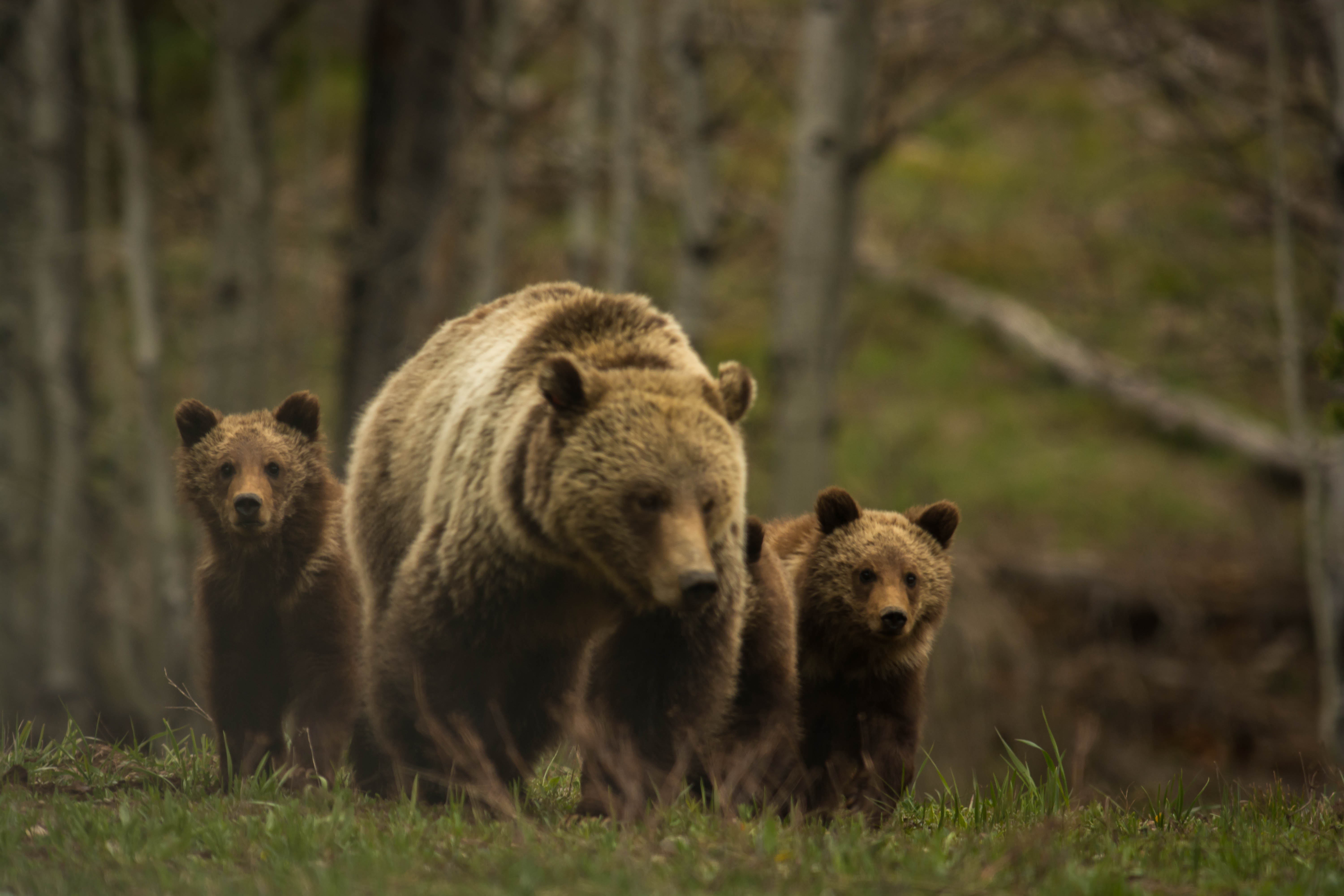 Https Scottseyephotos Wordpress Com Tag Grizzly Bear