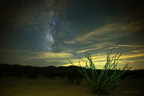 Ocatillo Milky Way