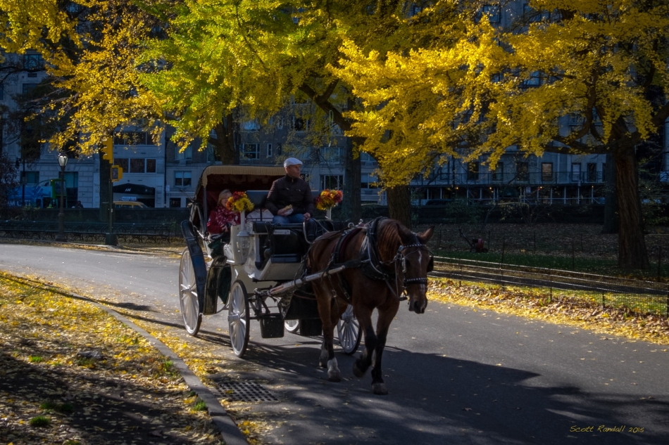 Central Park Horse Carriage-1