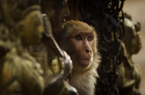 Monkey Gods?