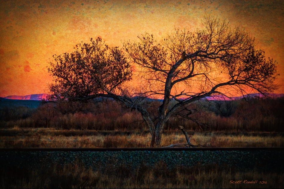 Railroad Tree at Sunset