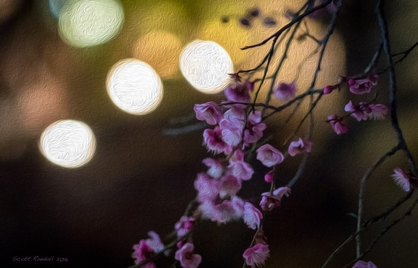 Blossoms in the Kyoto City Lights