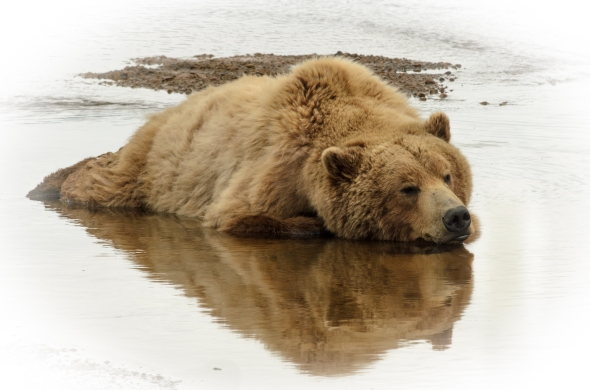 let sleeping bears lie....